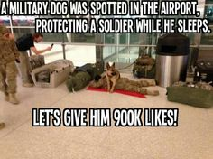 Humor Discover This isn& funny. Show respect to our military. That& one amazing dog and soldier. I Smile Make Me Smile Funny Animals Cute Animals Military Dogs Military Humor Military Soldier Military Quotes Military Personnel Funny Animals, Cute Animals, Animals Dog, Military Dogs, Military Humor, Military Soldier, Military Personnel, Police Dogs, Military Working Dogs