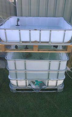 IBC aquaponics
