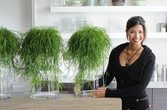 himalaya rhipsalis cassutha - perfect plant for filling emty spaces (inspiring)
