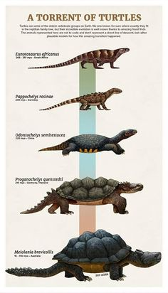 prehistoric animals A Torrent of Turtles - Julio Lacerda Prehistoric Wildlife, Prehistoric World, Prehistoric Creatures, Spinosaurus, Dinosaur Art, Extinct Animals, Tyrannosaurus, Creature Design, Fantasy Creatures