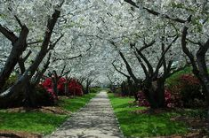 Macon, GA (cherry festival days)