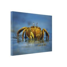 Golden Crab by the Sea photo Canvas Print