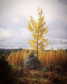 Ruska Autumn colours Autumn Colours, Finland, Landscapes, Country Roads, Photography, Paisajes, Scenery, Photograph, Photo Shoot