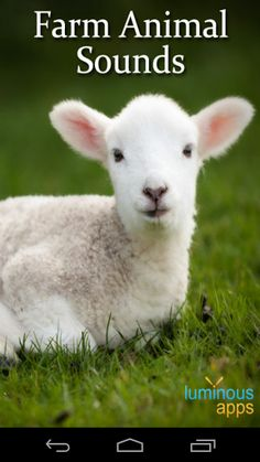 Presenting a completely Free Farm Animal Sounds compilation app with high quality sounds from various farm animals! <p>Featuring the Barn Cat, Bull, Calf, Chick, Chicken, Cow, Deer, Donkey, Duck, Duckling, Fawn, Frog, Goat, Goose, Horse, Kid, Lamb, Pig, Piglet, Pony, Rooster, Sheep, Sheepdog and Turkey!<p>Sounds can be played by tapping on the animal picture. All sounds can be saved as Ringtones, Notifications and Alarms by long pressing on an animal and selecting the relevant option.<p>An…