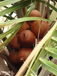 WWF Brasil - Frutos do Cerrado geram renda para comunidades locais