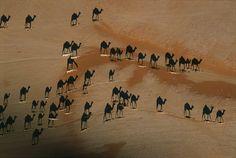 Toll! Kamele in der Wüste.
