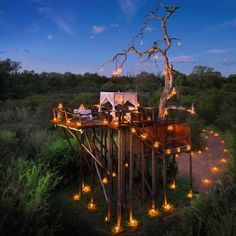 Glamping at The Bachelor