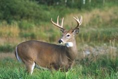 Which state is #1 for whitetail hunting?