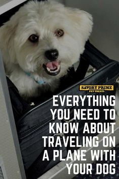 Everything You Need to Know About Traveling on a Plane with Your Dog Maltese Dogs, Dogs And Puppies, Dogs On Planes, Dog Travel, Travel Tips, Flying Dog, Cute Baby Cats, Pet News, Funny Dog Memes