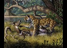 Megantereon Attacking Bushbuck  Megantereon, an early saber-toothed cat, may have eaten young rhinos, elephants, and horses. The felines probably bit their prey on the neck to kill them, and then let them bleed to death, like the bushbuck pictured here.