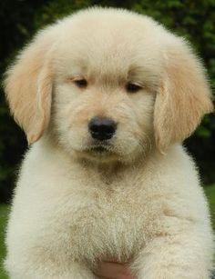 OMG he looks sooooo soft!!