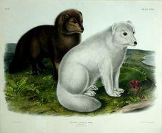 Canada Goose trillium parka replica discounts - 1000+ images about Painters: American: Audubon, John James on ...