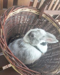 Cookie in the basket.  Cute bunny