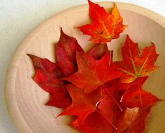 RED MAPLE LEAVES  Red Orange Autumn Hues  Dried by botanicalart, $7.99