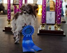 Ten of the most bizarre pictures from the World's Ugliest Dog contest. World Ugliest Dog, Ugliest Dog Contest, Animals And Pets, Cute Animals, Dog Competitions, Ugly Dogs, Bizarre Pictures, Richest In The World, Cute Dog Photos