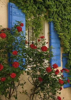 Colors of Provence... by Rainer Fritz, via Flickr