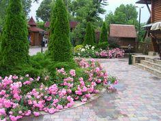 Какие кустарники могут украсить ваш сад своим цветением