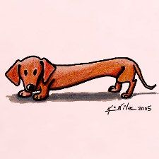 Red Doxie smooth haired