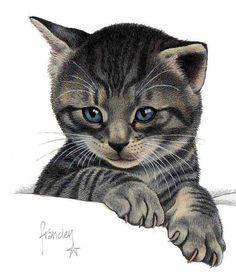 franciens katten - Google zoeken