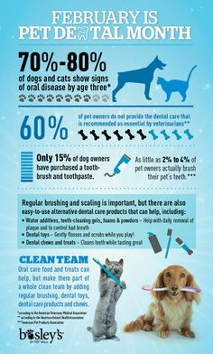 February is Pet Dental Month, but it is important to think about oral health all year!