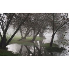 Fog in Forest ❤ liked on Polyvore featuring backgrounds, pictures, photos, images and forest