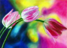 Prismacolor drawing. Tulip love. #Prismacolor art.  #Tulip #Drawing.  #Colorpencil.