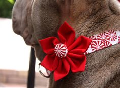 Peppermint dog collar