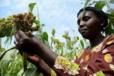 Without women, african #agriculture won't withstand climate change