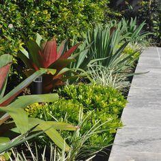 Alcantarea imperalis 'Rubra', Beschorneria yuccoides, Pittosporum Miss Muffet & Ophiopogon Stripey White. Nurseries, Outdoor Spaces, Landscaping, Exotic, Anna, Garden, Projects, Plants, Garden Layouts