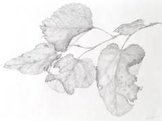 Graphite Leaf Drawing