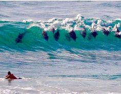 (See Next Pin) CA Surf | Gangway! Newport Beach on Instagram