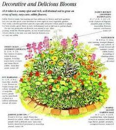 Annual Cut Flower Garden Layout plants and gardening