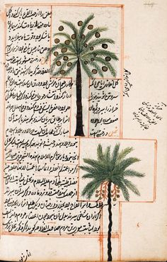 I have something with Palm trees-  Persian manuscript by al-Qazwini's  'The Wonders Of Creation',  compiled mid 1200
