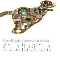"""DONATIONS FOR HELPING ANIMALS FROM """" KOLA KARIOLA """" : http://www.asociatiakolakariola.com/doneaza.html"""