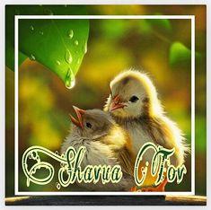 Shavua Tov, Shabbat Shalom, Atonement, Pentecost, Israel, Faith, Holidays, Animals, Blessed Week