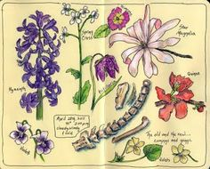 Sketching in Nature: Spring Flowers for my Sketching in Nature Journal