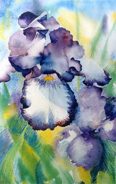Watercolor Art - Bearded Iris by 6catsart, via Flickr