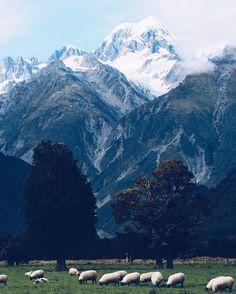 Maybe most New Zealandish photo ever  #newzealand #mtcook #mttasman #southernalpsnz #southislandnz #foxglacier #adventures