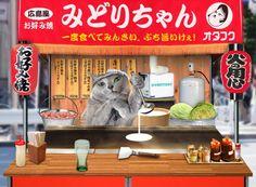 お好み焼き猫 - http://iyaiyahajimeru.jp/cat/archives/54875