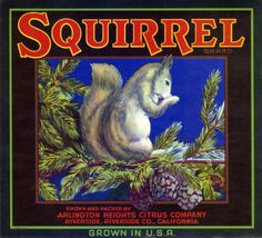 Squirrel Brand - Arlington Heights, California