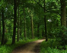 spring forest path