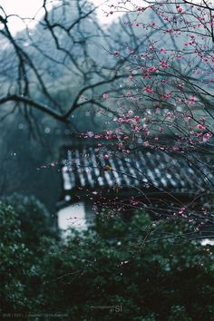 Aesthetic Japan, Nature Aesthetic, Japanese Aesthetic, Rain Photography, Landscape Photography, Beautiful Nature Wallpaper, Beautiful Flowers, Scenery Wallpaper, Asian Art