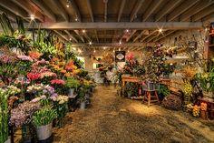 The Drill Hall Emporium: melbourne antique fair highlights including country oak dresser! Flower Room, Flower Nursery, Flower Shop Interiors, Brunswick Street, Oak Dresser, Flower Boutique, Antique Fairs, Garden Shop, Shop Interior Design