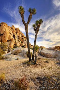 Joshua Tree National Park, California; photo by James Neeley