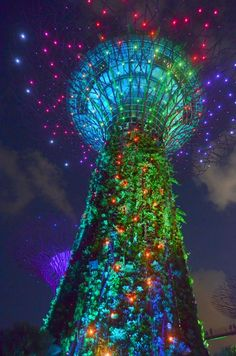 The Multi-coloured Tree! Photo by Sumana Yerneni -- National Geographic Your Shot
