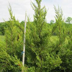 My Wishlist Trees And Shrubs, Arch, Outdoor Structures, Garden, Longbow, Garten, Lawn And Garden, Gardens, Wedding Arches