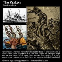 The Kraken. Tales from the deep... we have all seen this creature in movies but what truth is there to it? http://www.theparanormalguide.com/blog/the-kraken