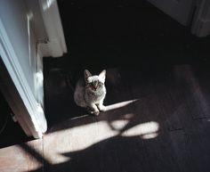 .looks like my kitty