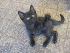 Tobo, the resident cat at Beach Terrace Inn. #ThrowBackThrusday Kitty pic