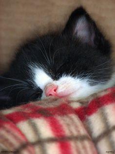 Cozy kitten, how cute